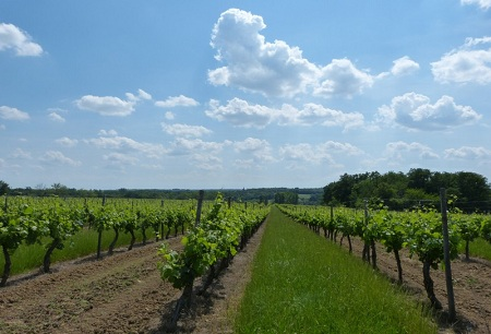 a comparison of burgundy and bordeaux the provinces of france famous for producing wine Increase your red wine cabernet franc is part of the essential blending triad that makes up the majority of the bordeaux is the most famous.